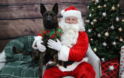 K9 Tigo Visits Santa at Chow Down Pet Supplies